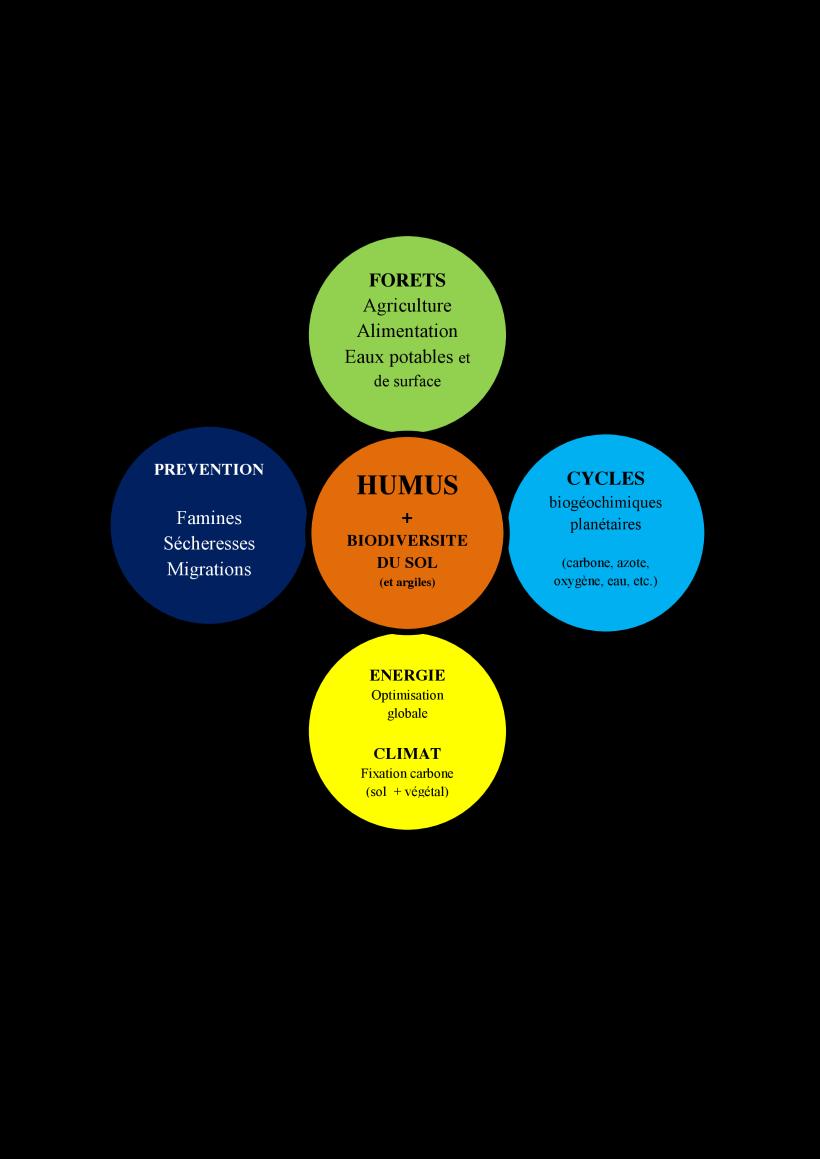 HierarchieHumus_4